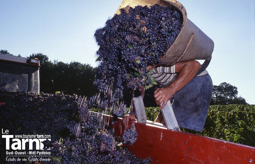 Vignobles du Gaillac © JL. Pieux avec creation